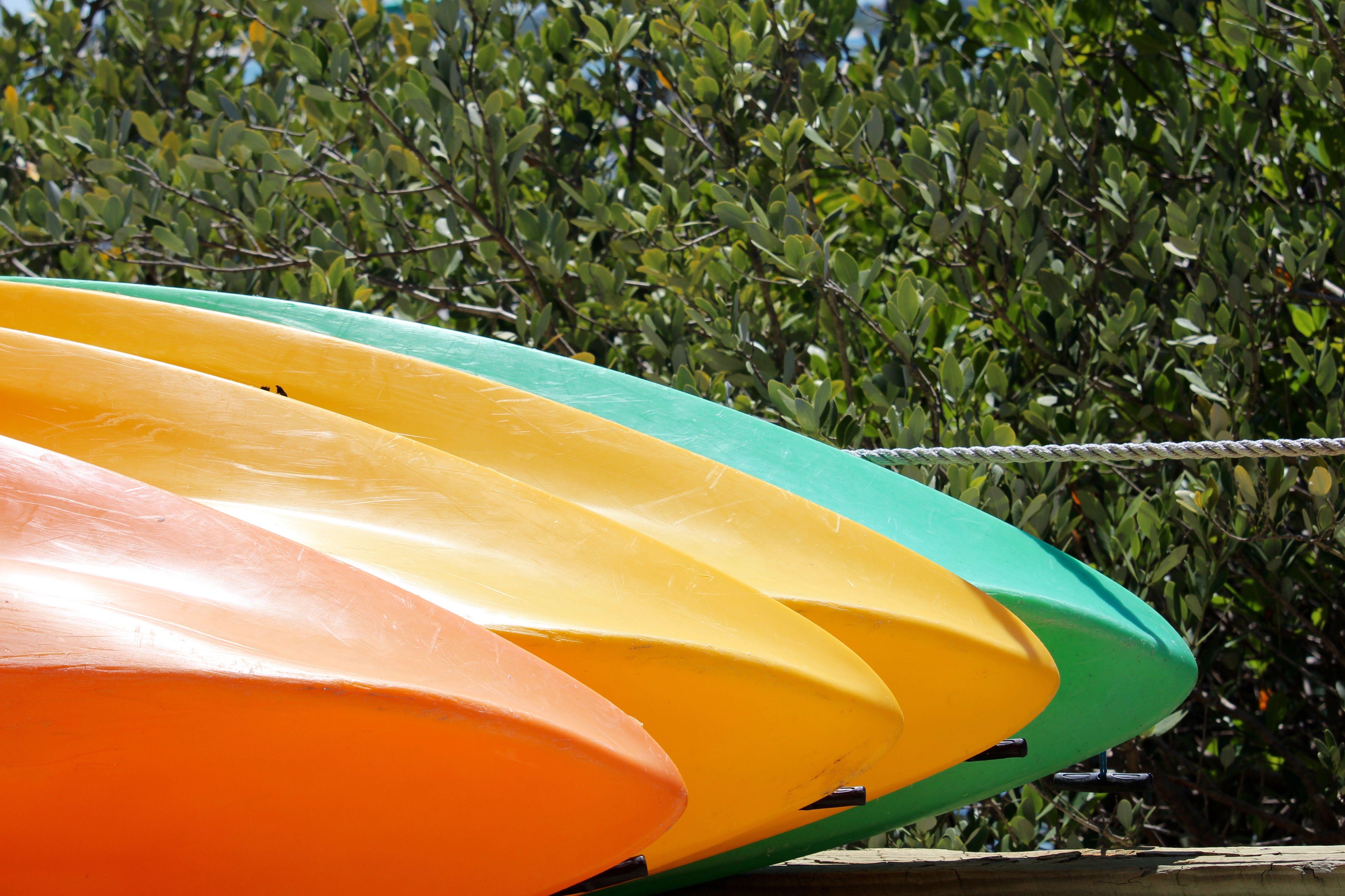 Colorful Kayaks next to Florida mangrove