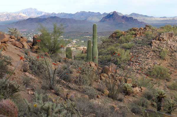 View from McDowell Mountains in Scottsdale, AZ