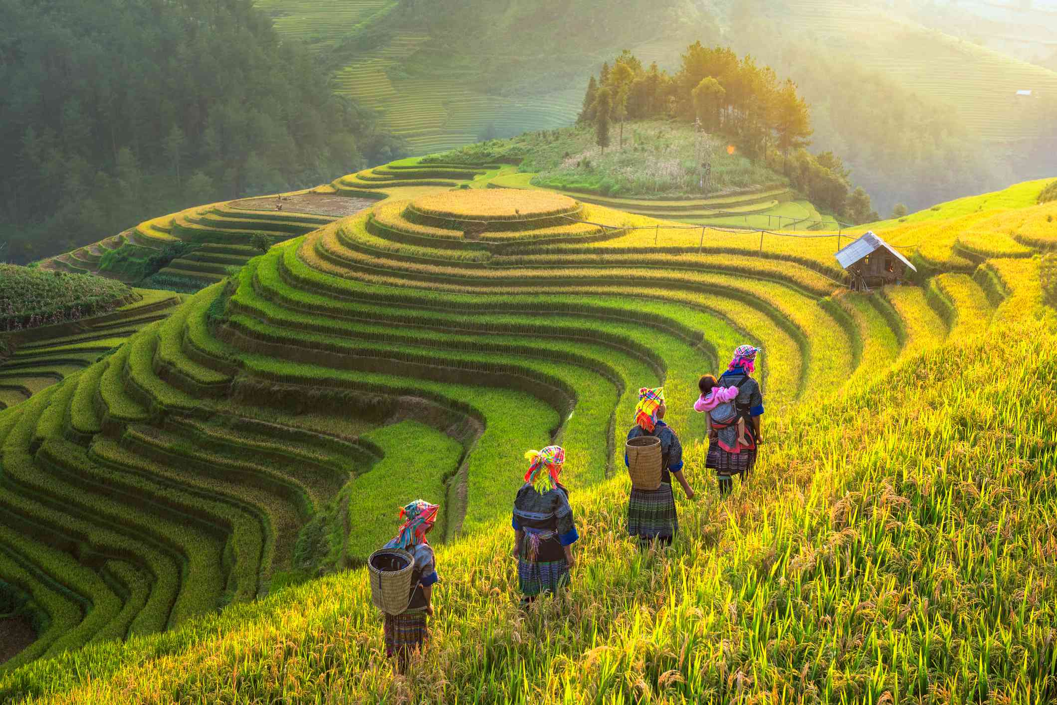 Rice fields and villagers in Sapa, Vietnam