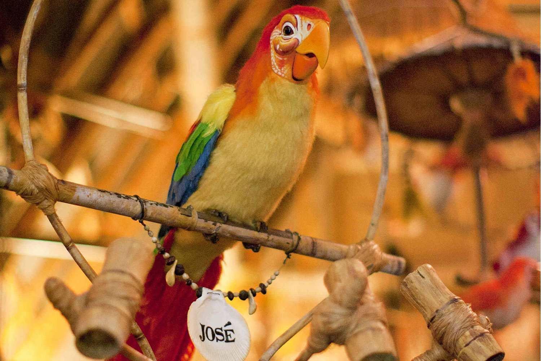 Birds Sing Songs at the Enchanted Tiki Room
