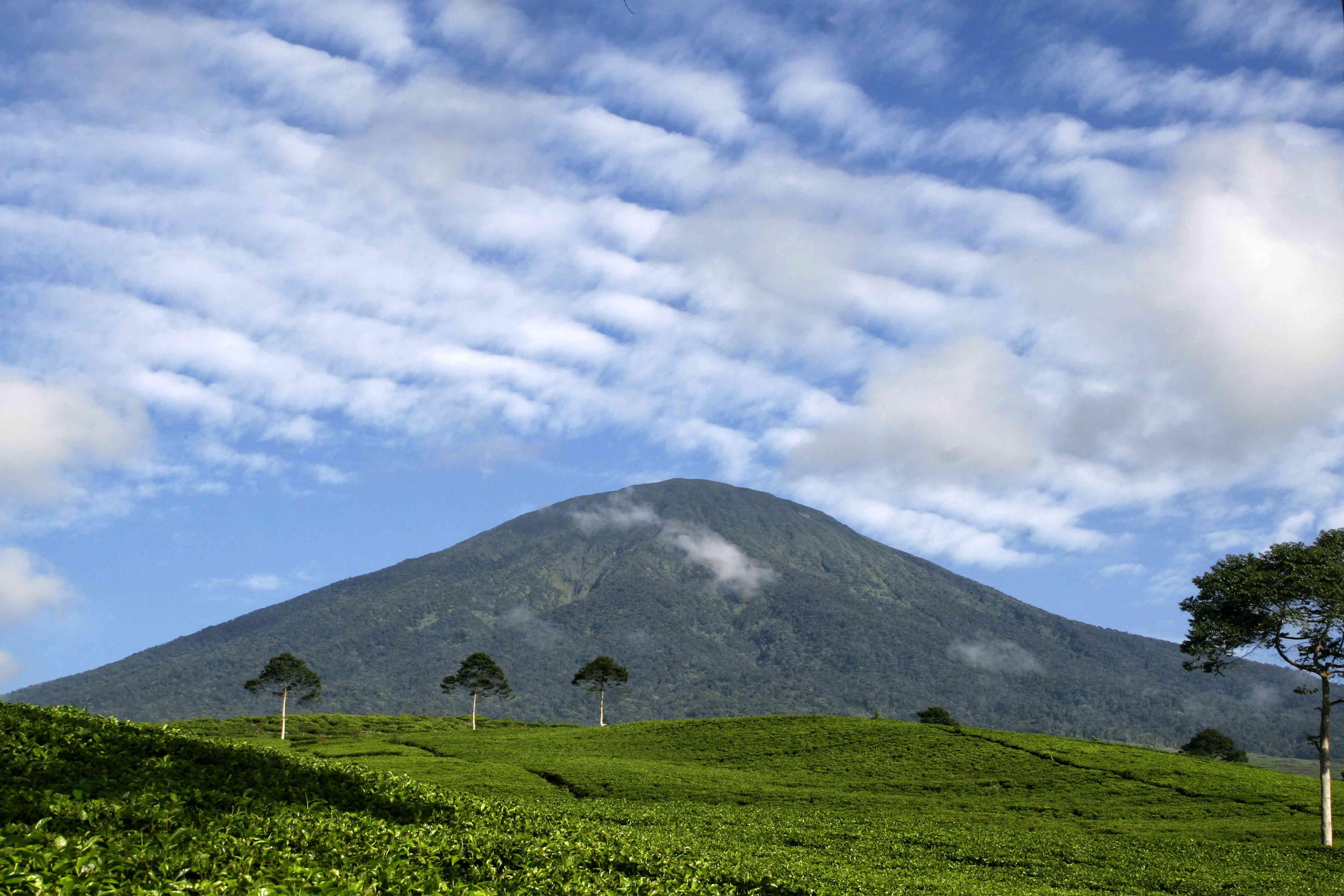 Mount Dempo and a tea plantation in Pagar Alam, Sumatra