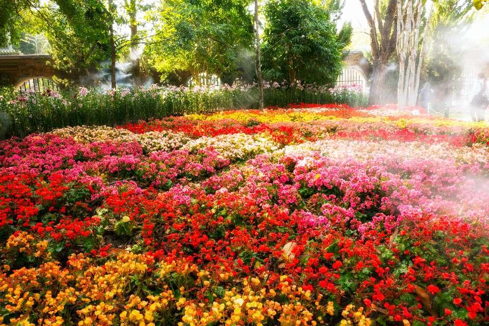 Which perennials survive best in sunny michigan gardens busakorn pongparnit getty images perennials mightylinksfo