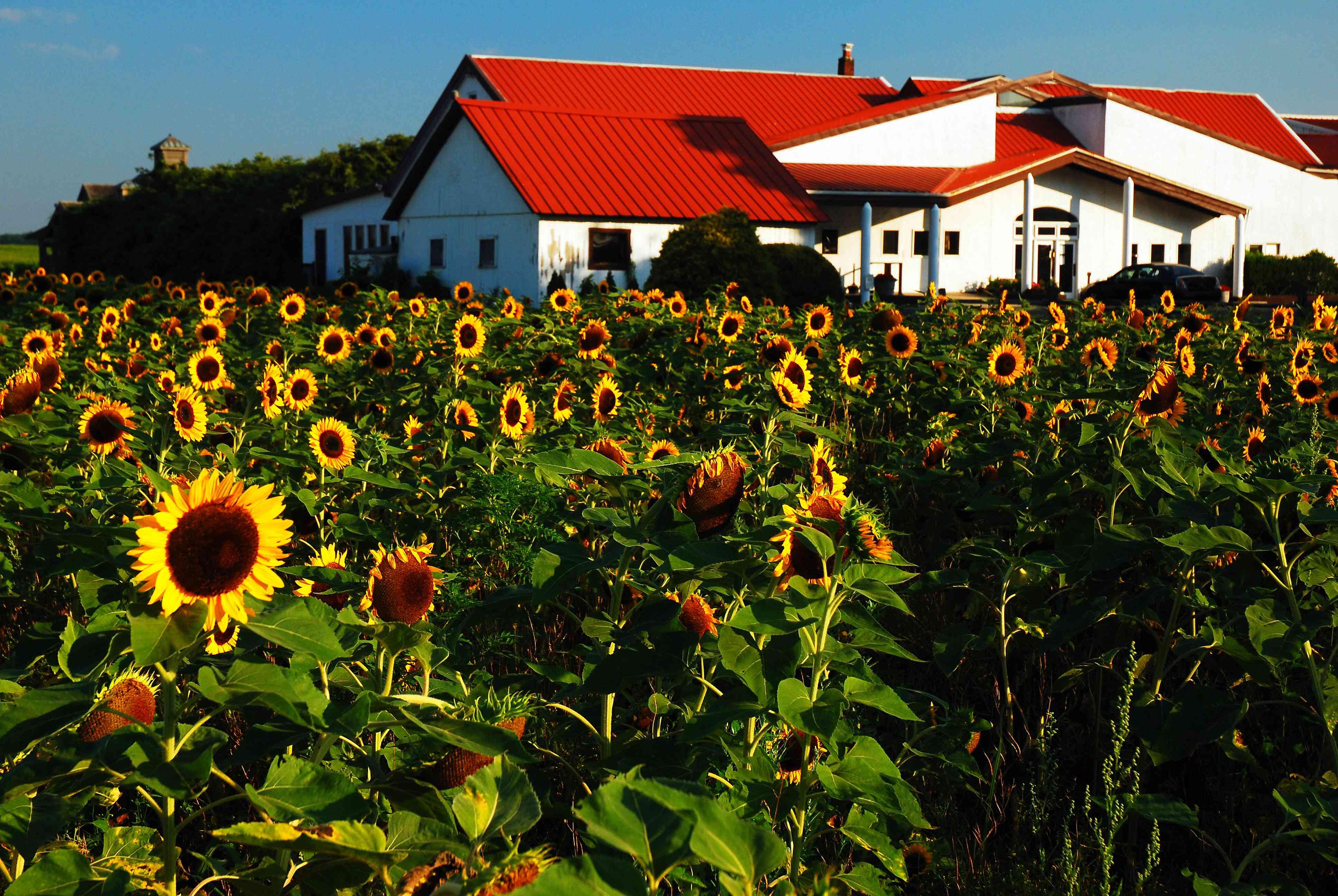 Pindar Winery, North Fork Long Island