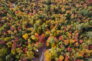 Colorful Autumn trees in the Adirondacks New York