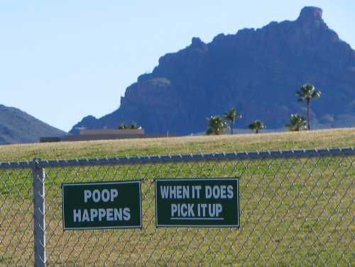 Phoenix Dog Parks Where Dogs Can Run Free and Play on