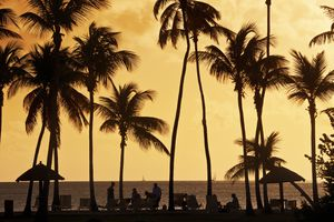 palm trees and people on a beach at sunset in silhouette