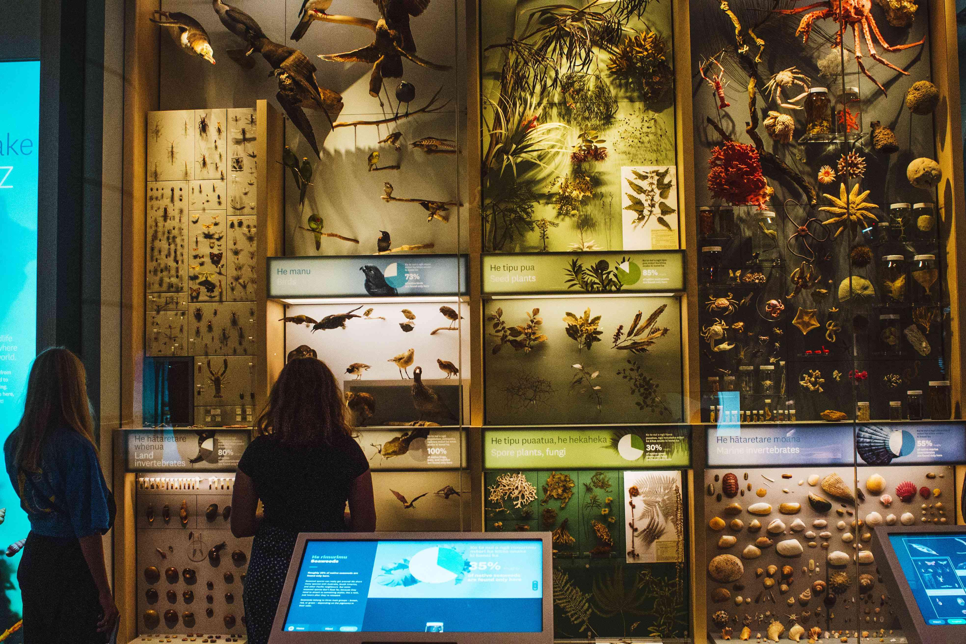 An exhibit on native wildlife at Te Papa museum