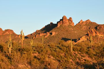 Golden light of the Sunset and Giant Saguaros (Carnegiaea gigantea) at Massacre Ground, part of Lost Dutchman State Park, Arizona, near the city of Phoenix and along the famous Apache Trail. Superstition Mountains in the background