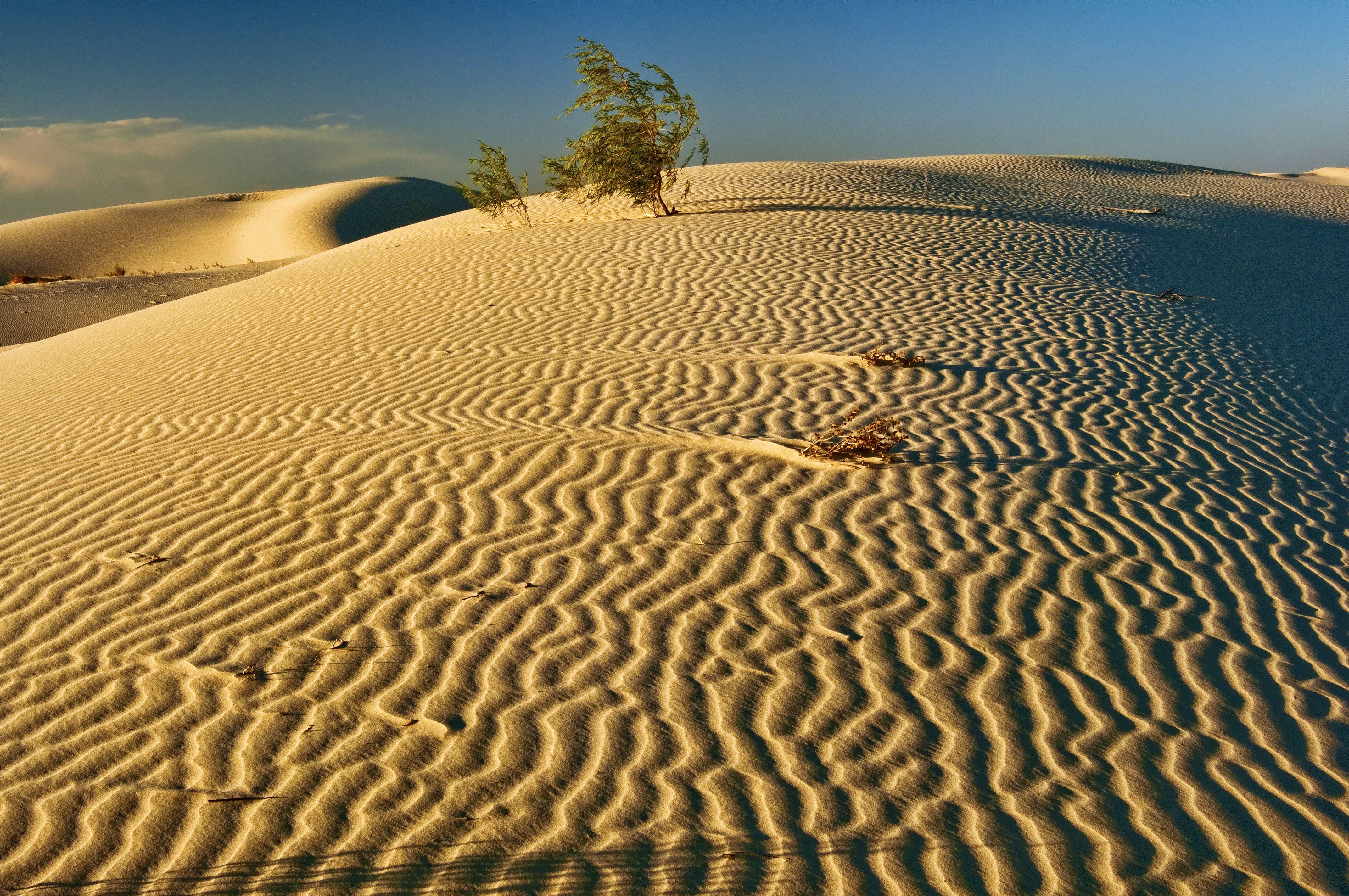 Dunes at sunset, Monahans Sandhills State Park, Chihuahuan Desert, Texas, USA