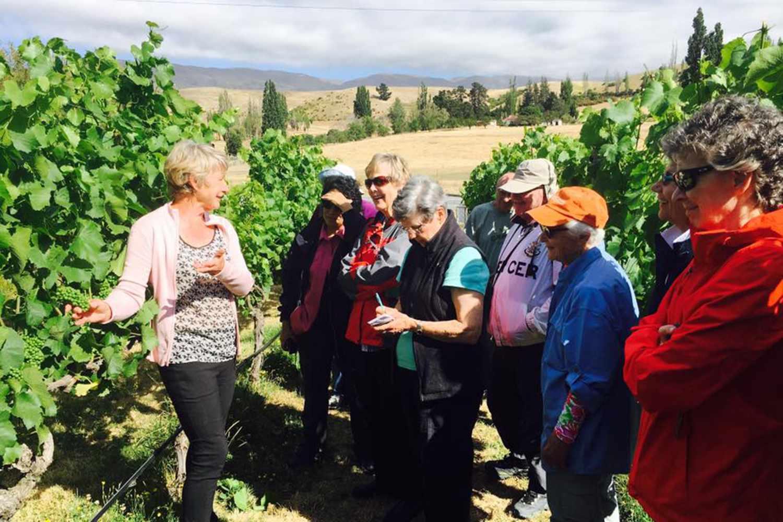 Overseas Adventure Travel Pinot grapes