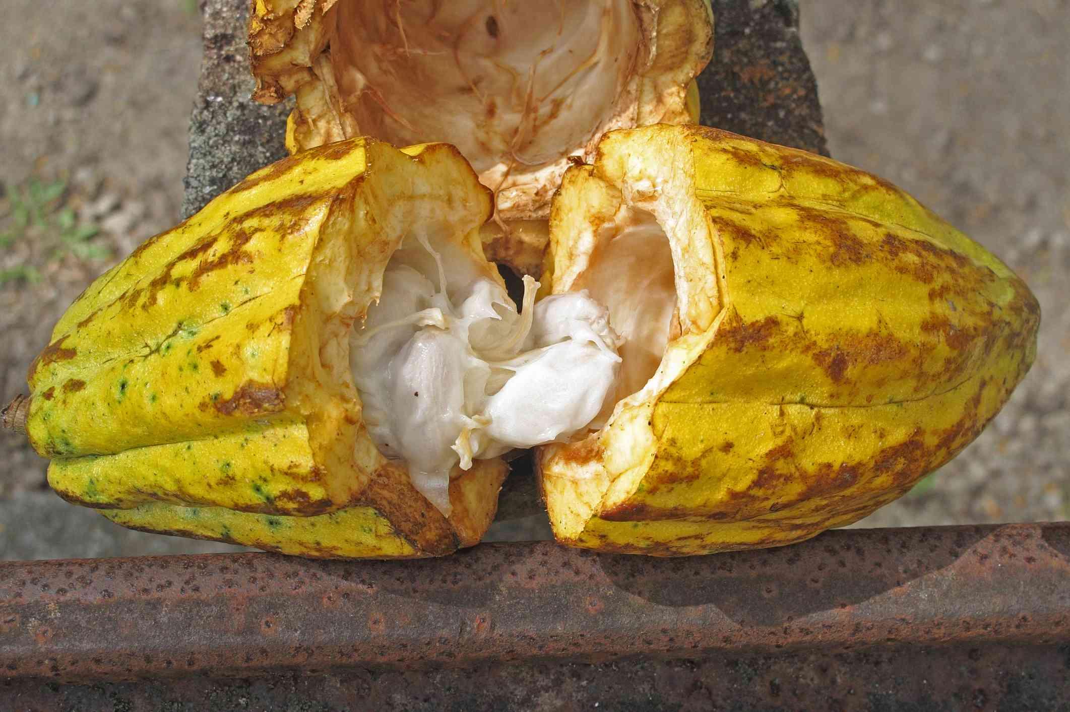 cocoa st. lucia