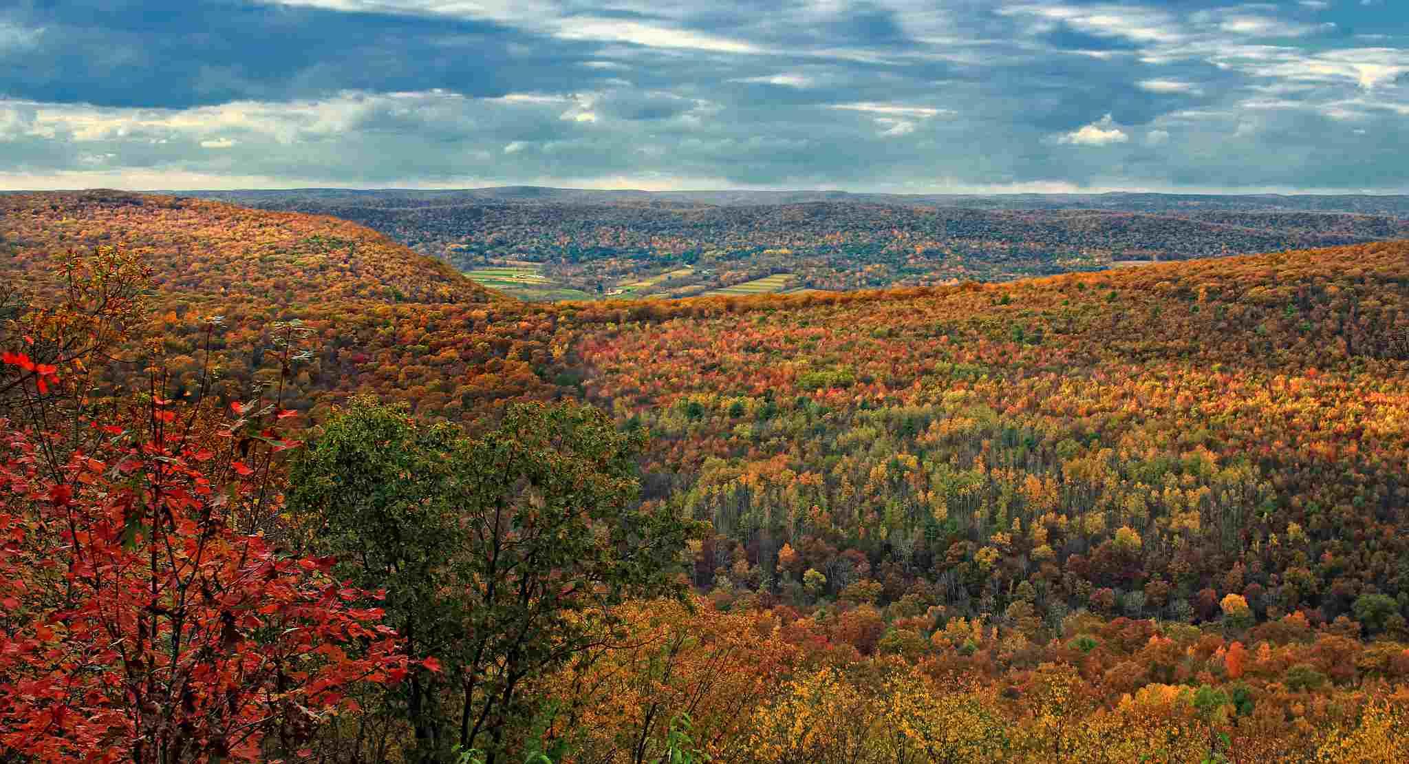 Tiadaghton State Forest, Pennsylvania