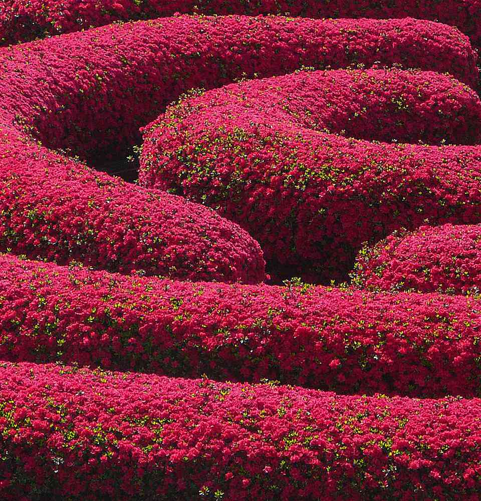 Spring Flowers in the Getty Center Gardens