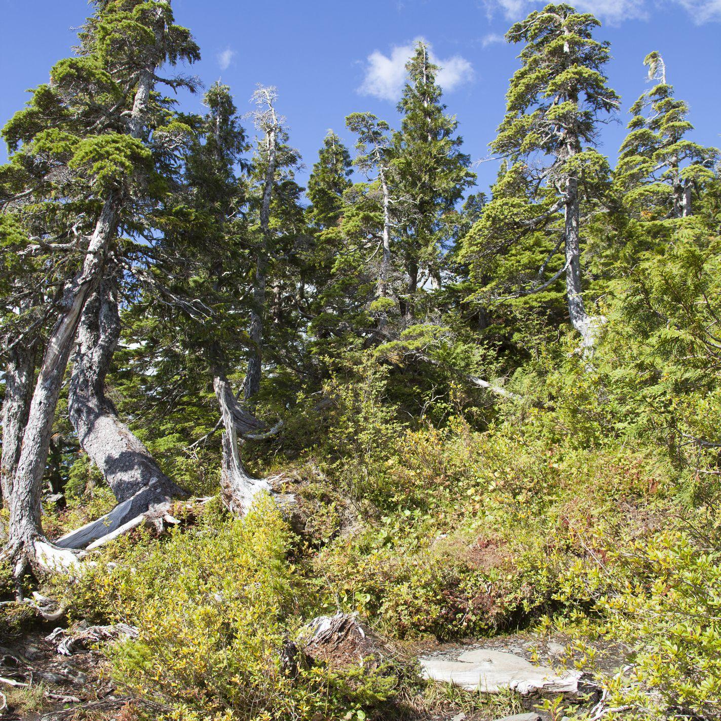 The hiking footpath to Deer Mount outside Ketchikan town (Alaska).