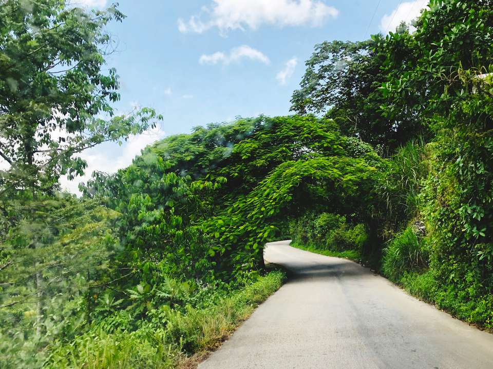 tree-lined road in Jamaica