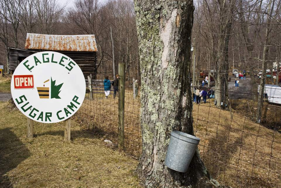Entrance to Eagle's Sugar Camp, maple sugar maker, Highland County.