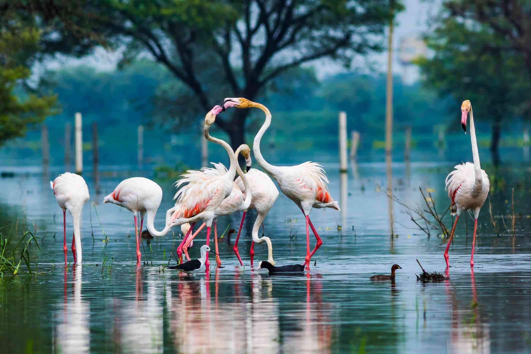 Birds at Bharatpur.