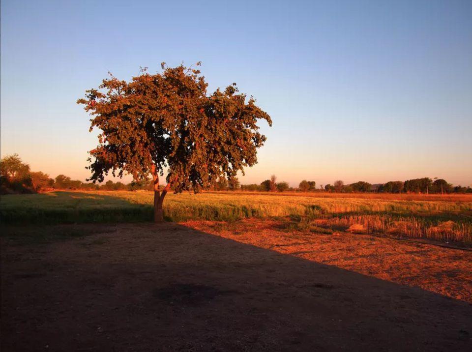 Outlook from Culture Aangan homestay in Padampura, Rajasthan