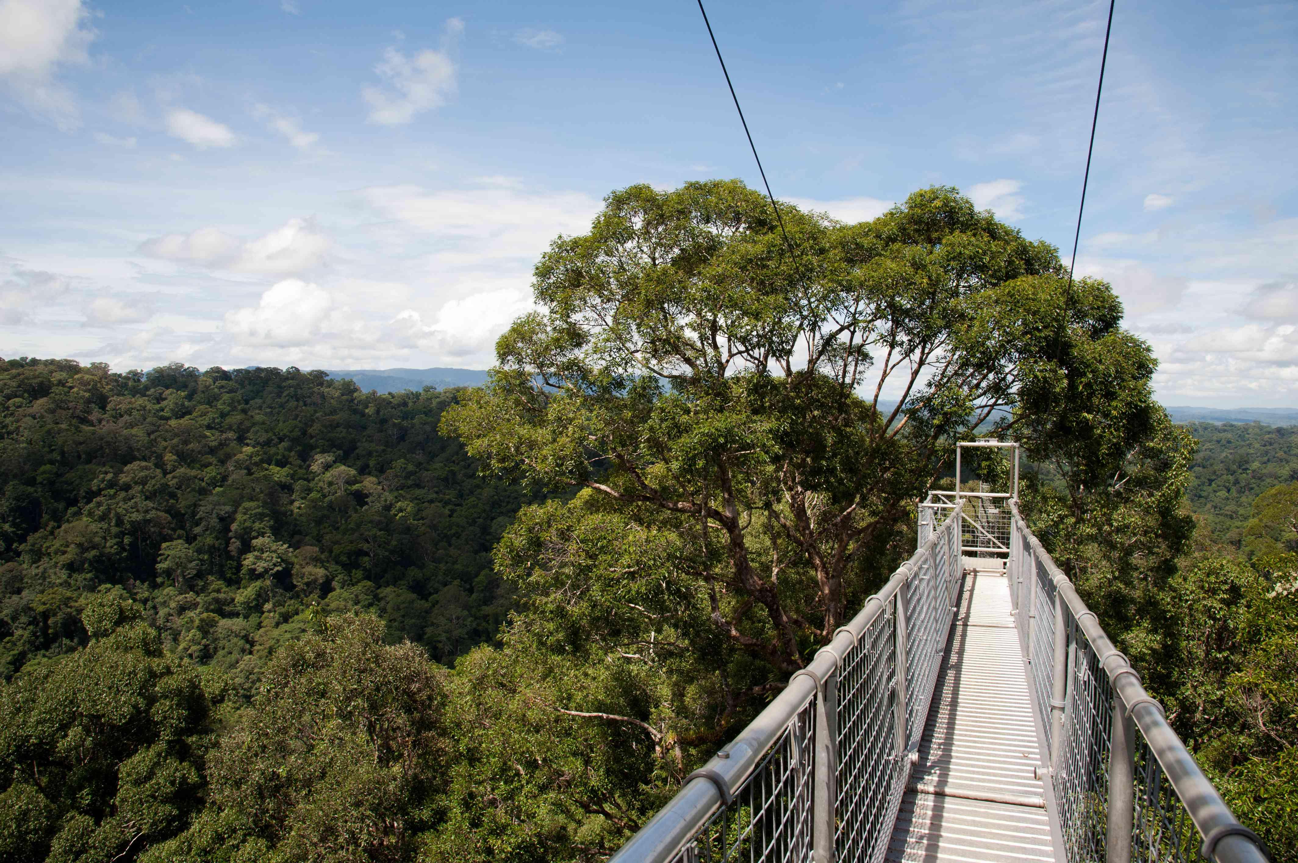 Canopy walk at Ulu Temburong National Park, Borneo