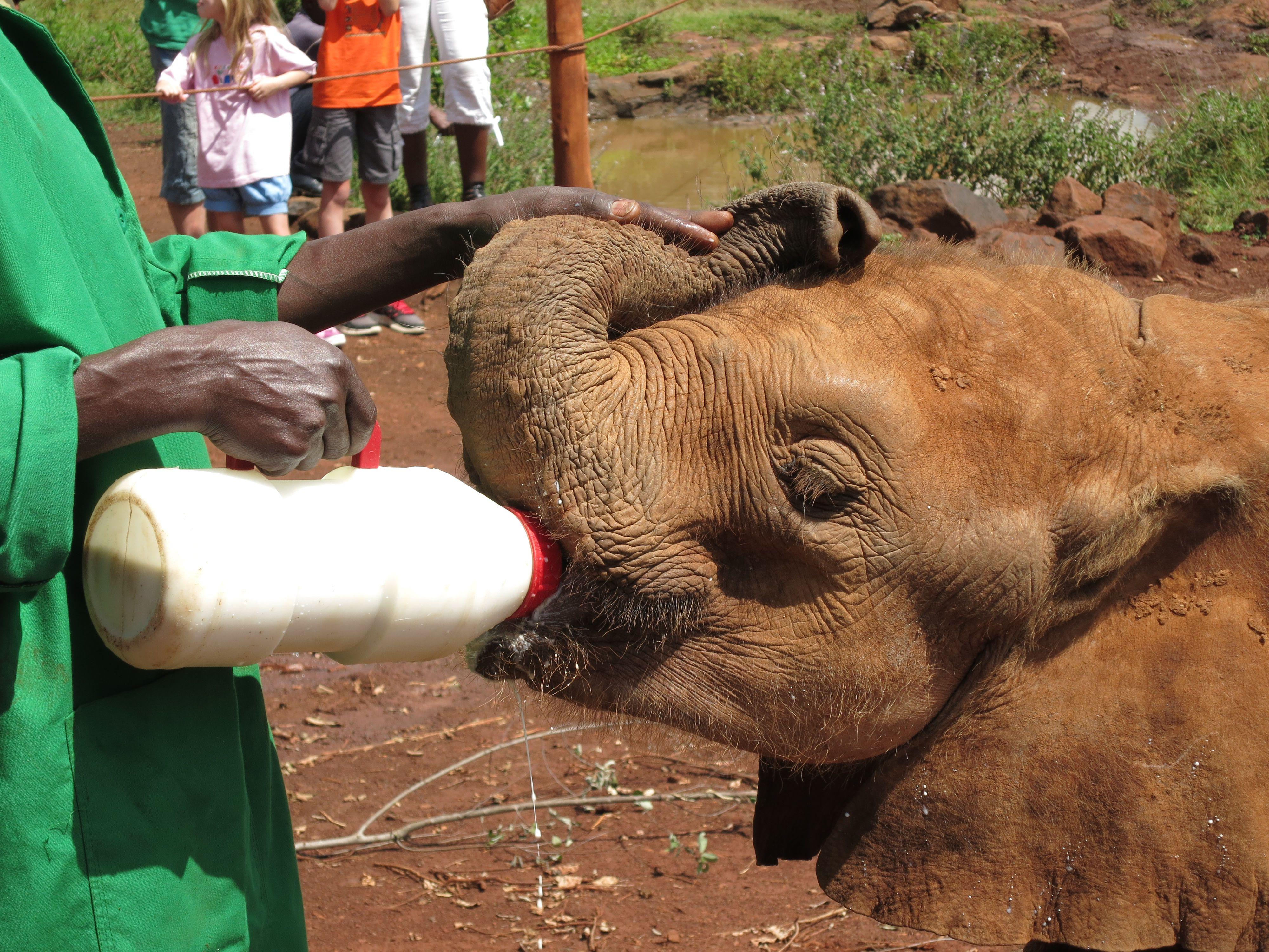 The David Sheldrick Elephant Orphanage