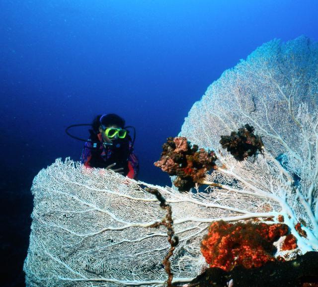 Gorgonian coral along Sumilon Island's underwater wall.