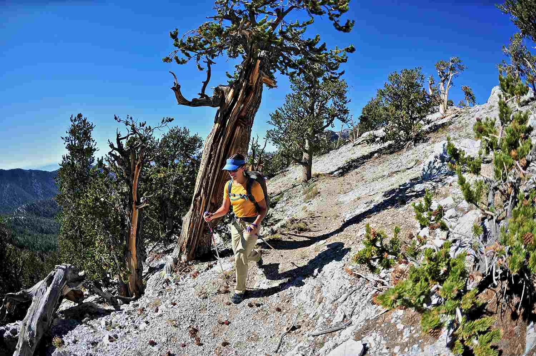 Mujer joven senderismo, Mount Charleston Wilderness trail, Nevada, EE. UU.
