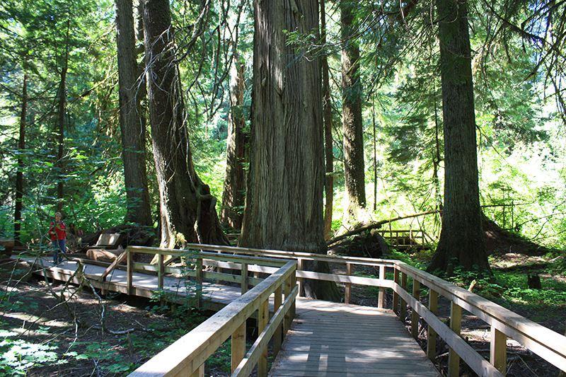 Paseo marítimo por el bosque de los Patriarcas en el Parque Nacional Mount Rainier