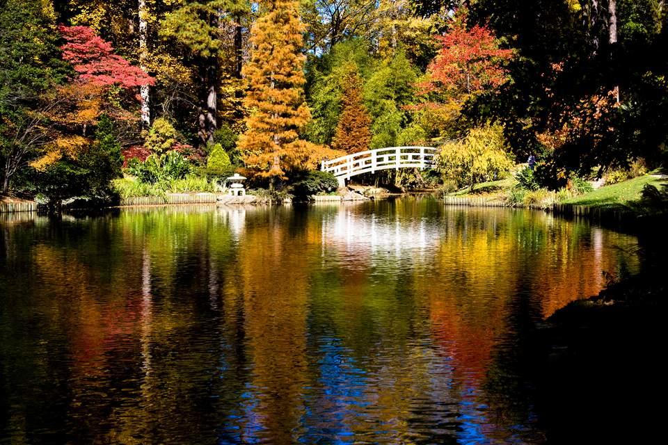 Fall color in the Duke Gardens at Duke University in Durham, N.C.