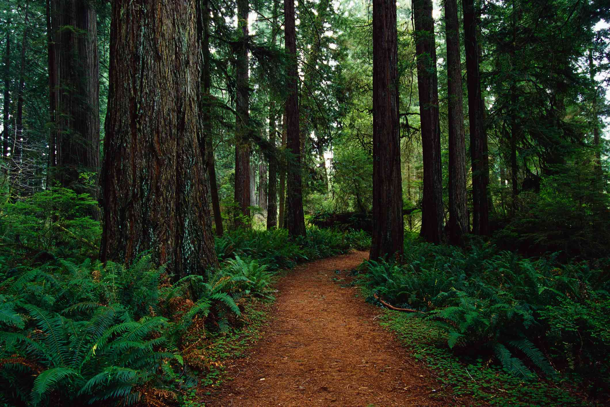 Trail at Prairie Creek Redwoods State Park