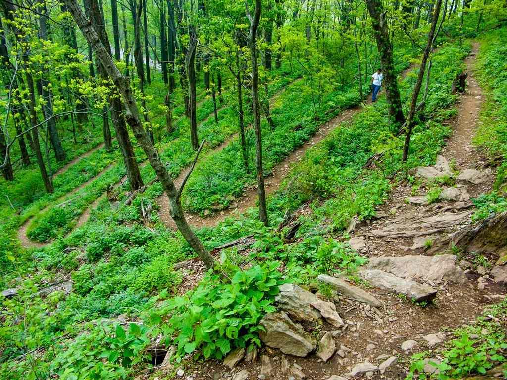 Rattlesnake Lodge Trail