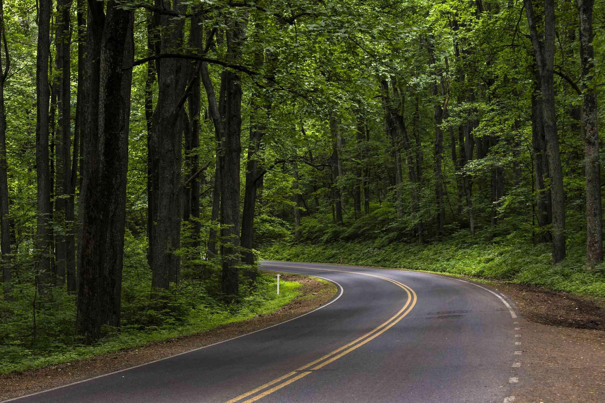 Skyline Drive serpentea por el Parque Nacional Shenandoah