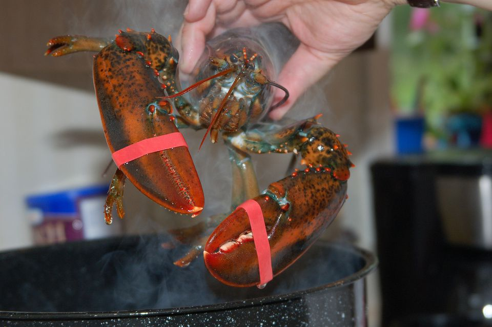 Boil Lobsters