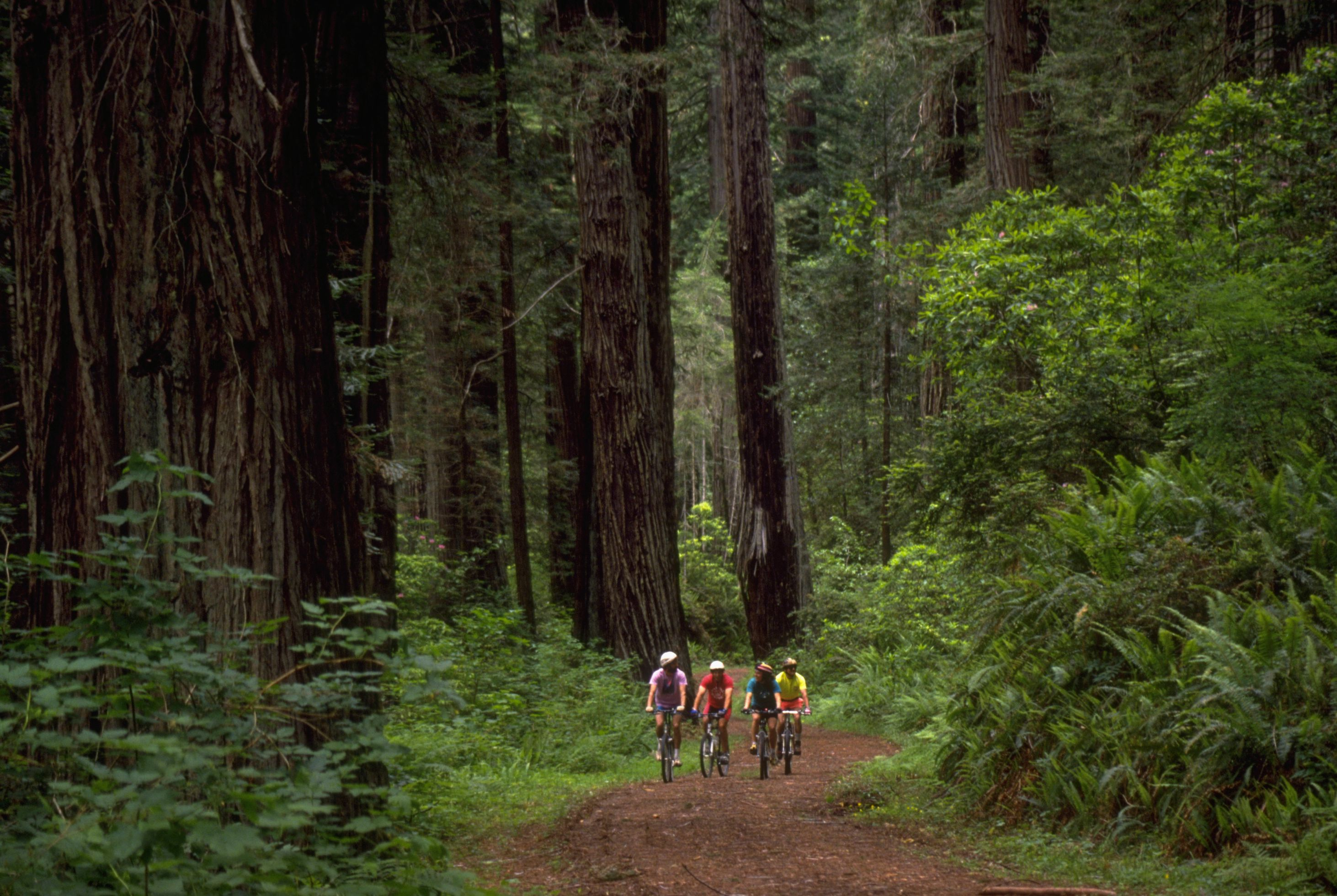 Four mountain bikers ride on the Old Highway 101 through Jedediah State Park