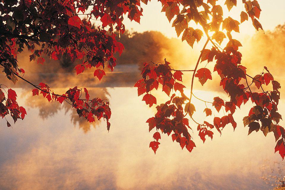 settings Autumn Leaves