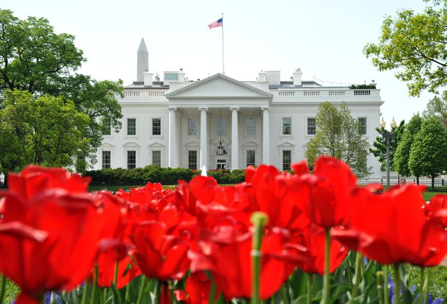 Tulips at the White House