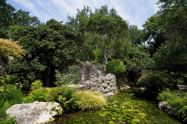 Estanque rodeado por plantas en el jardín botánico