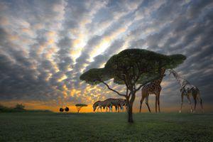 Sunset in safari Africa