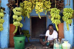 Madurai banana market.