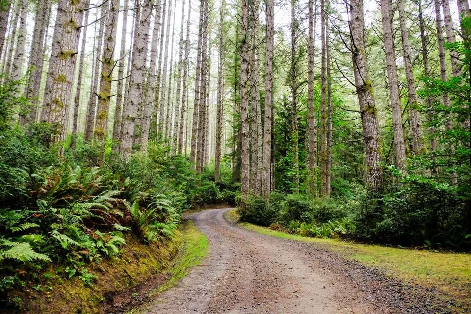 A path through the forest on Bainbridge Island