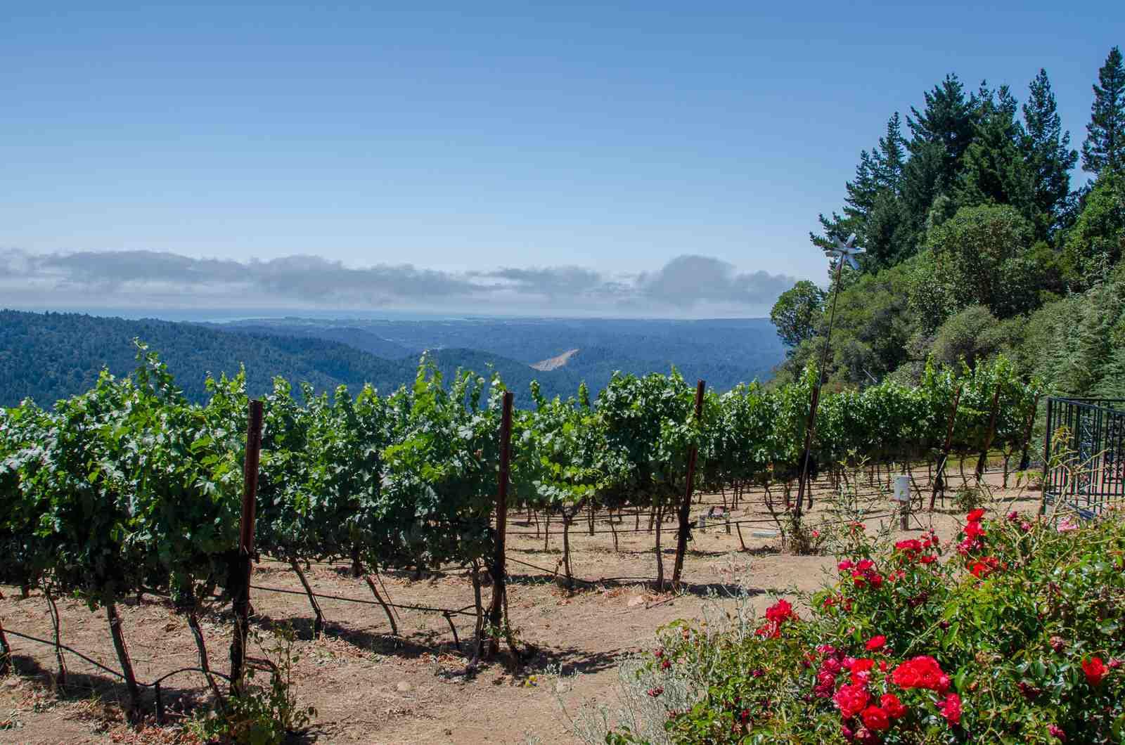 View from Loma Prieta Winery, Los Gatos
