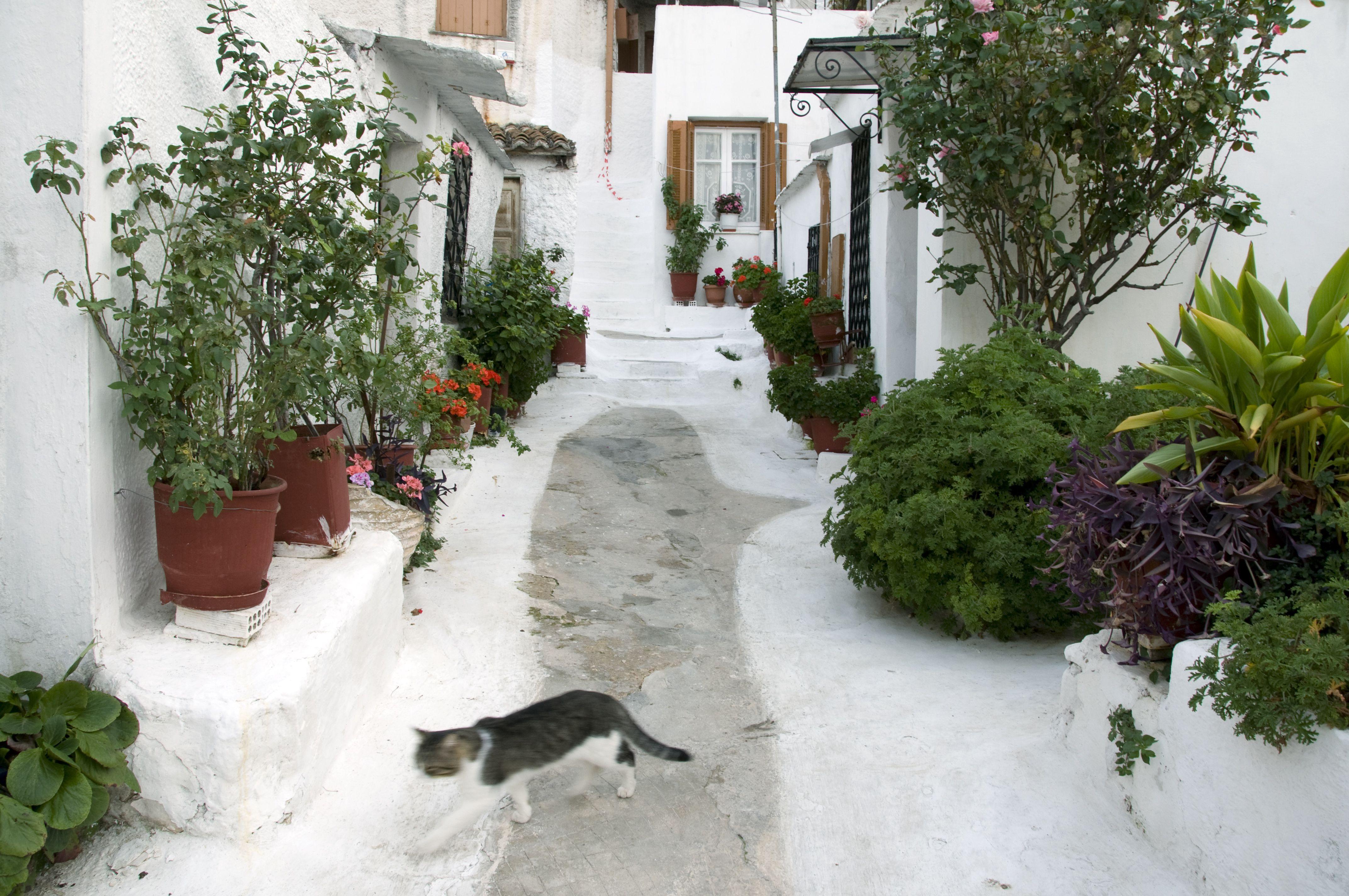Gato caminando por un camino estrecho y empinado en el barrio de Anafiotika