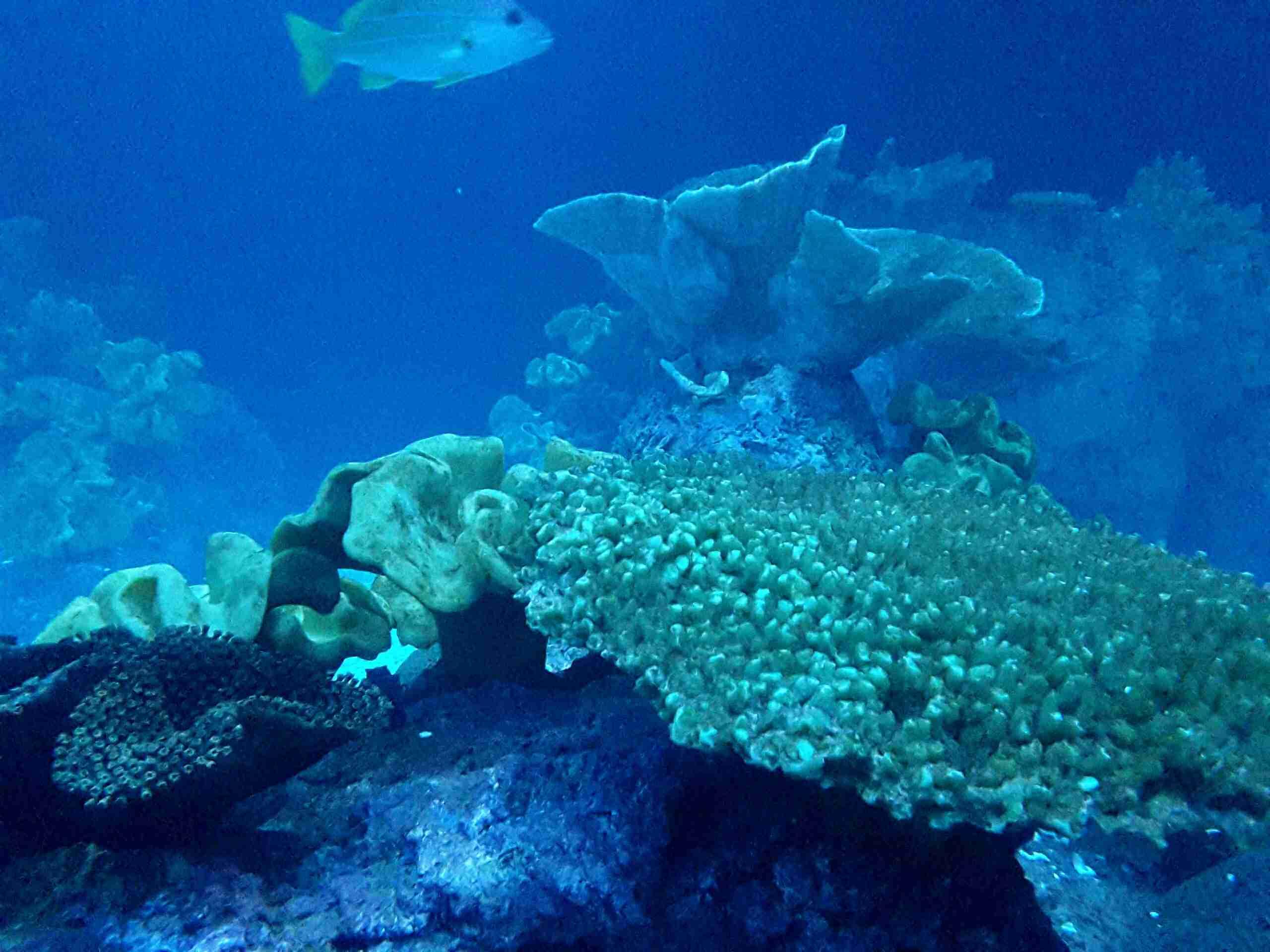 Fish And Corals At Shedd Aquarium