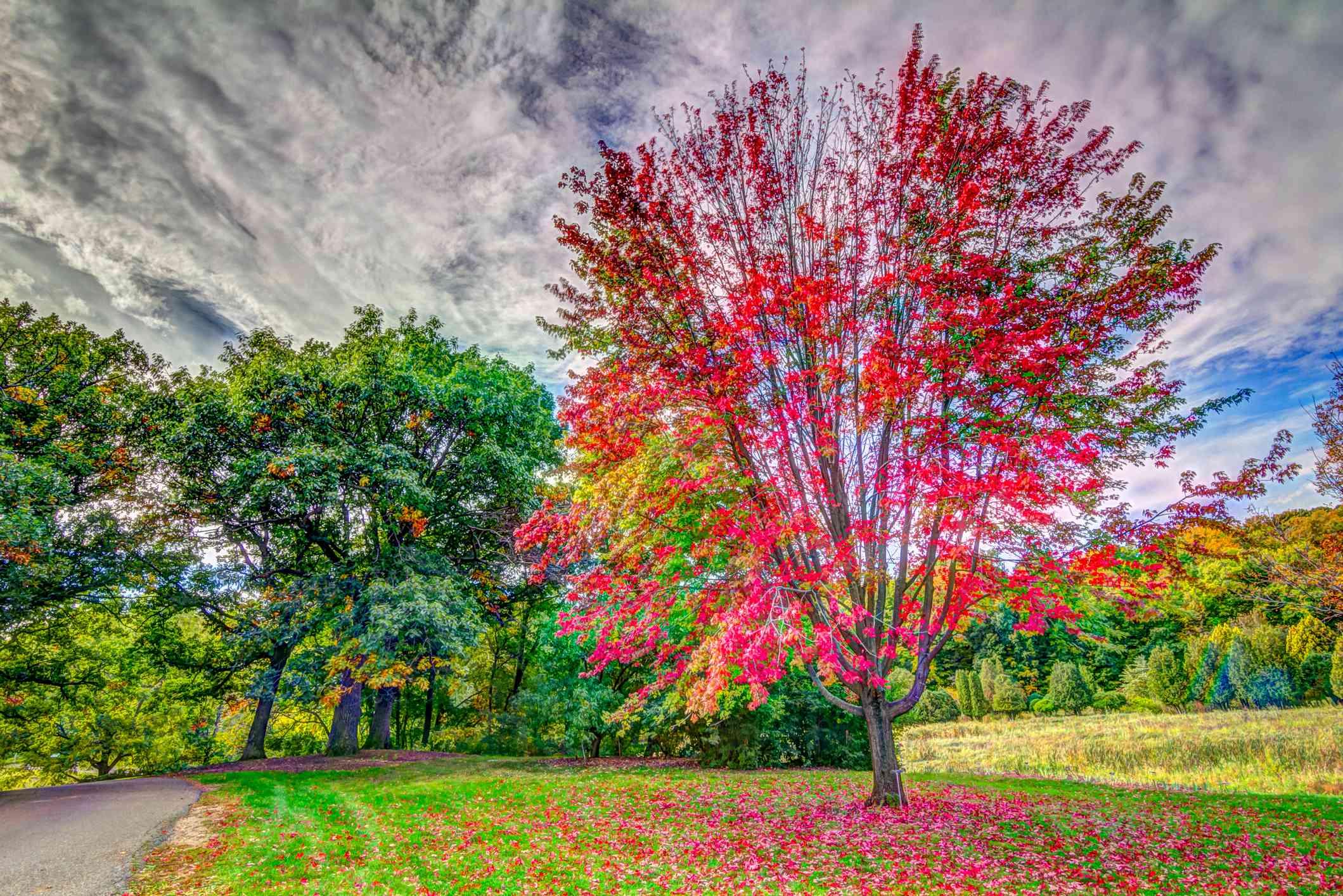 Fall Color at Minnesota Landscape Arboretum