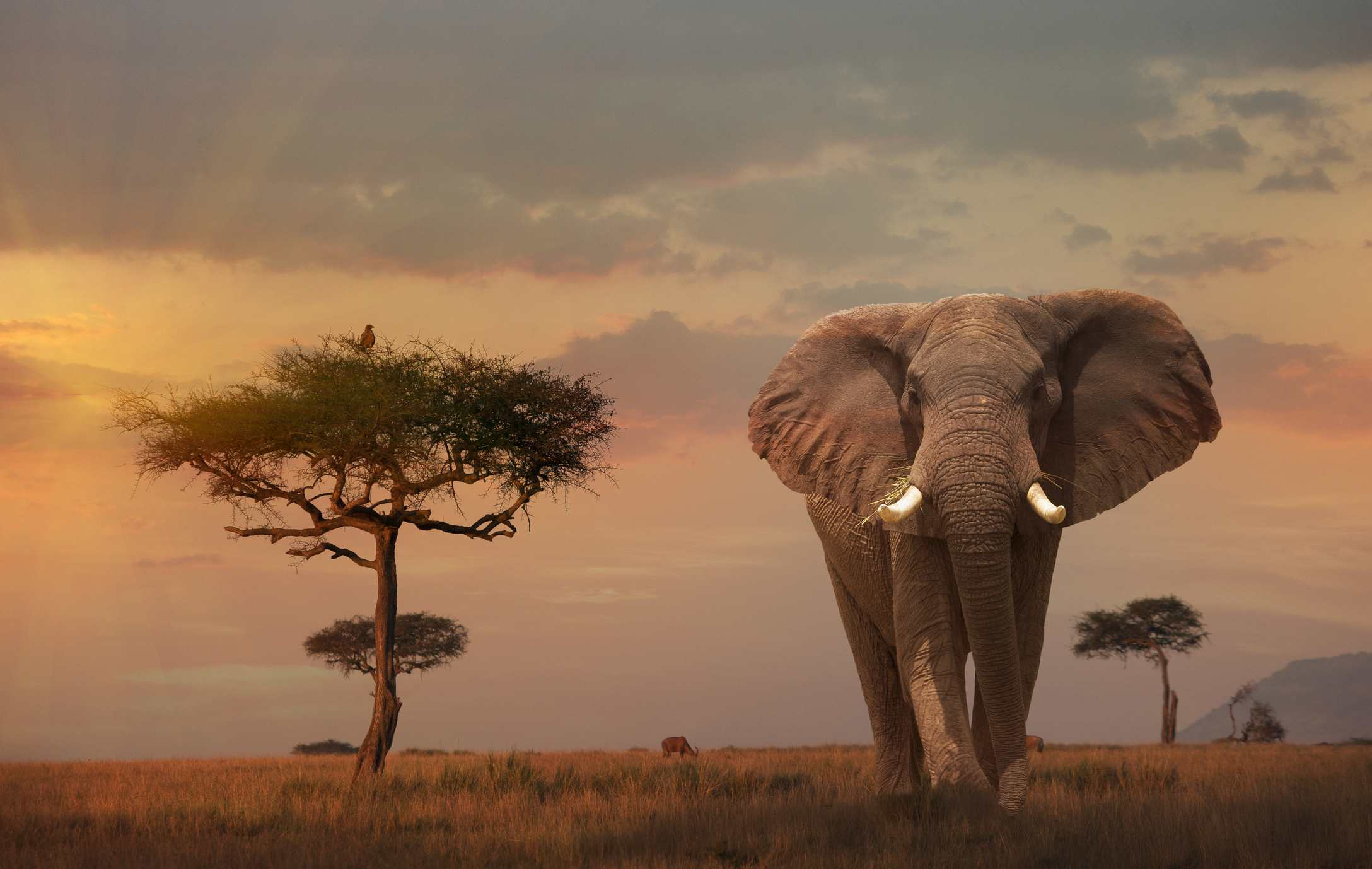 Masai Mara National Park.