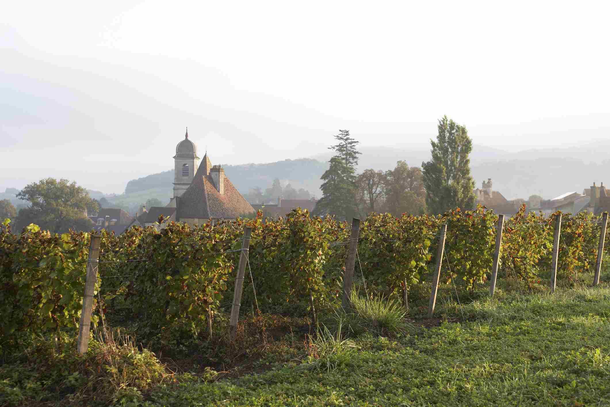 Vineyards near Arbois, Jura