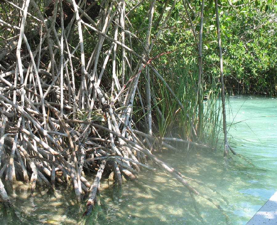 Visiting the Sian Ka'an Biosphere on the Riviera Maya
