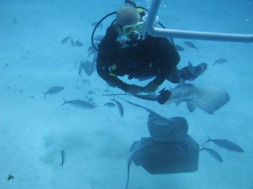 Grand Cayman Island's Stingray City