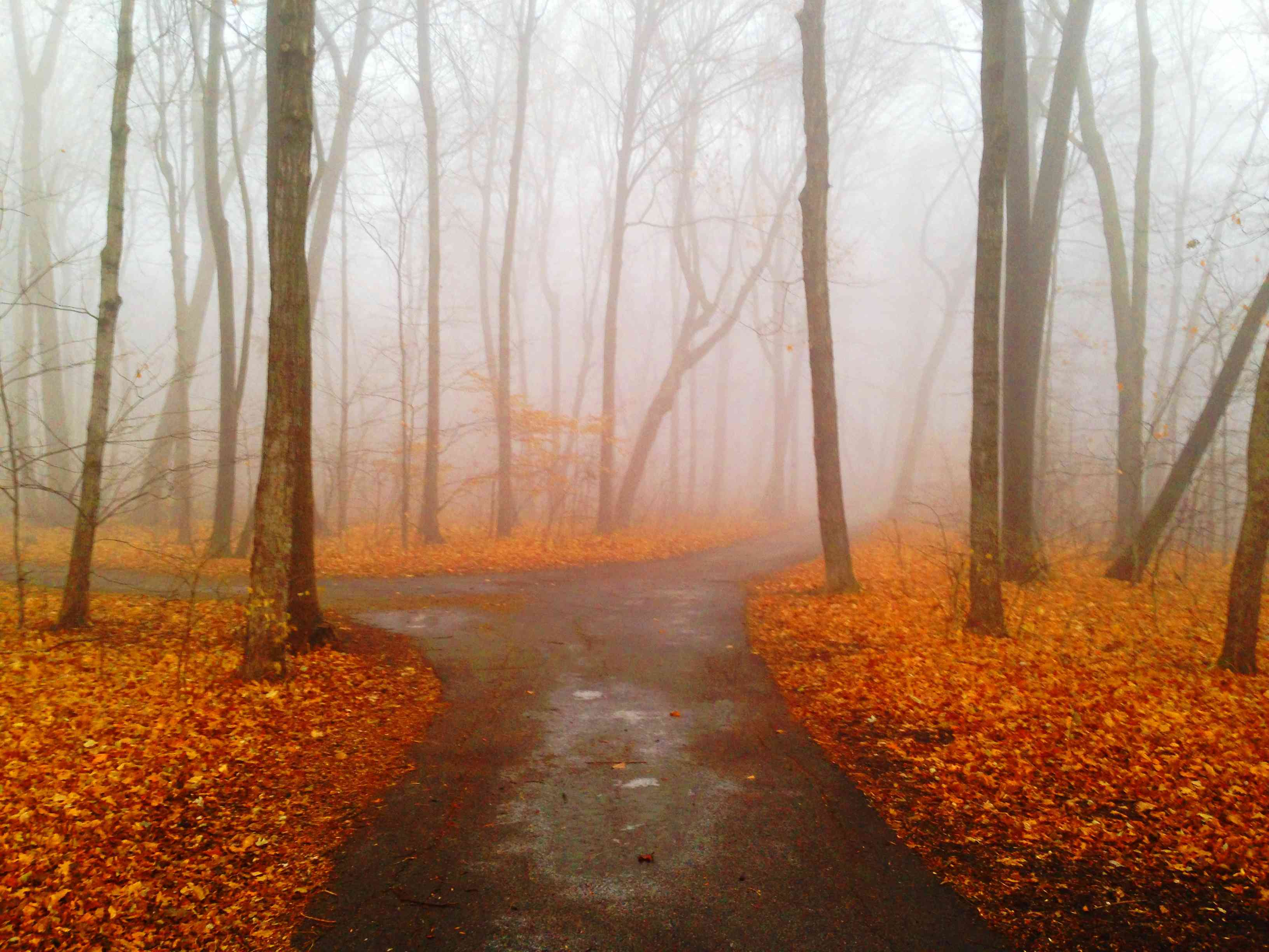 Road Amidst Trees In Forest During Autumn in Mankato
