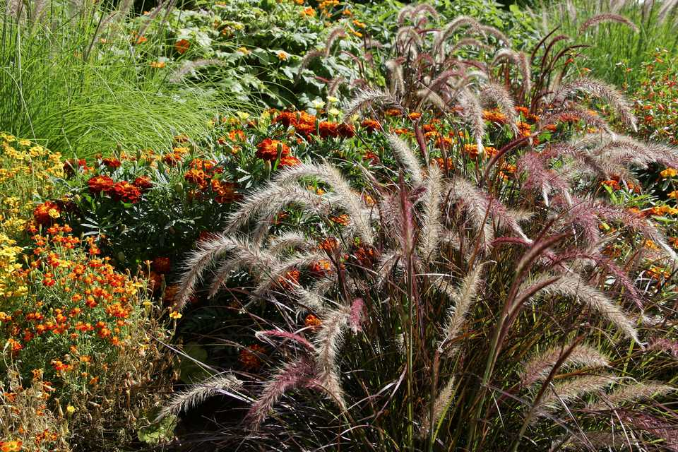 perennials that will thrive in michigan gardens