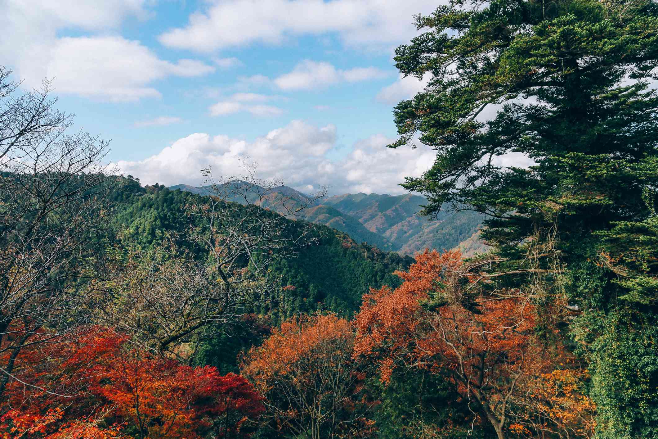 vibrant and colorful autumnal landscape of Mount Takao in Tokyo, Japan